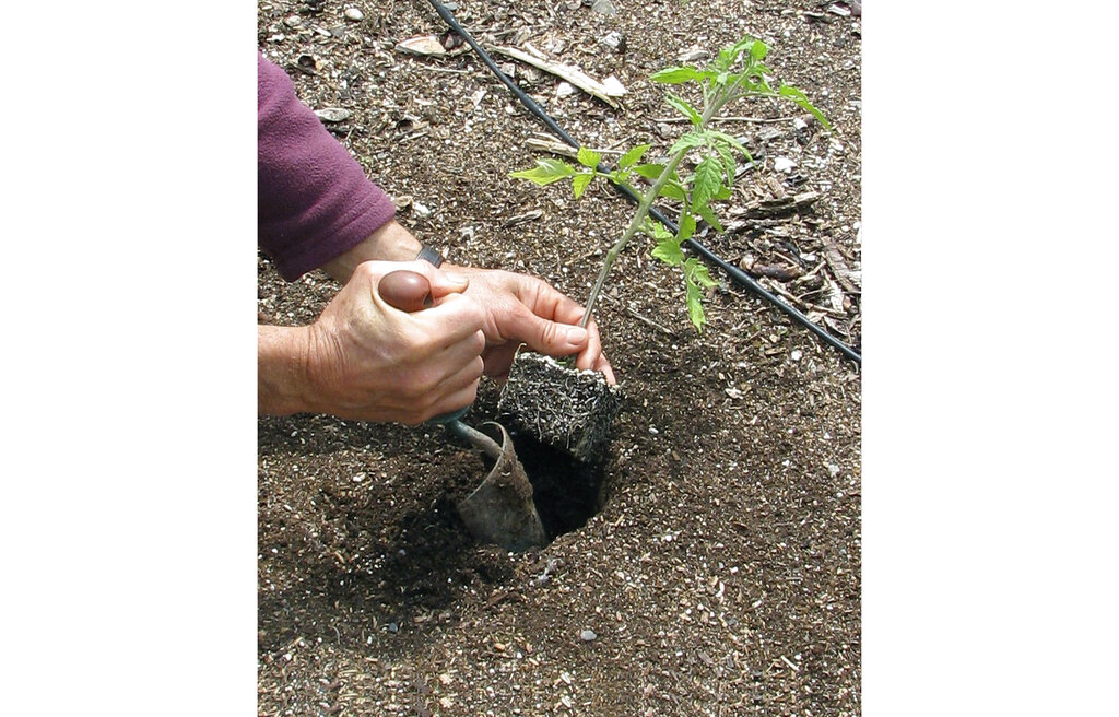 Turning point: When is it safe to plant your garden?